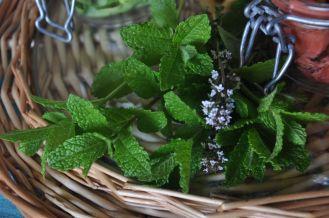 erbe aromatiche, menta e timo in fiore