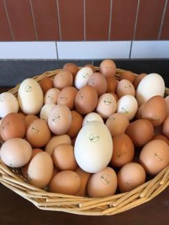 Uova di gallina e di papera Agrilab