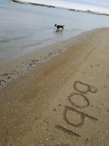 Lungo mare di Cattolica e il cane Bob