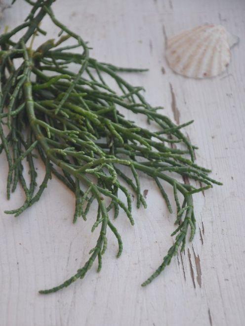 Ramo di salicornia