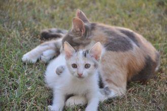 Cannella (la piccolina) e mamma Nina