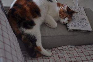 Violetta, che dorme sulle mie ricette