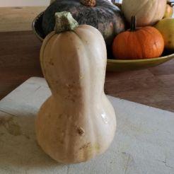 Zucca butternut, per risotto zucca e salsiccia